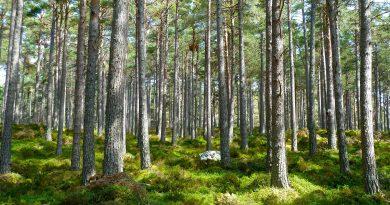 ArcGIS aplicada às Florestas